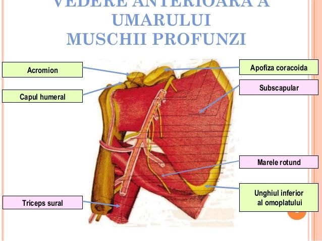 Periartrita scapulohumerala (PSH)